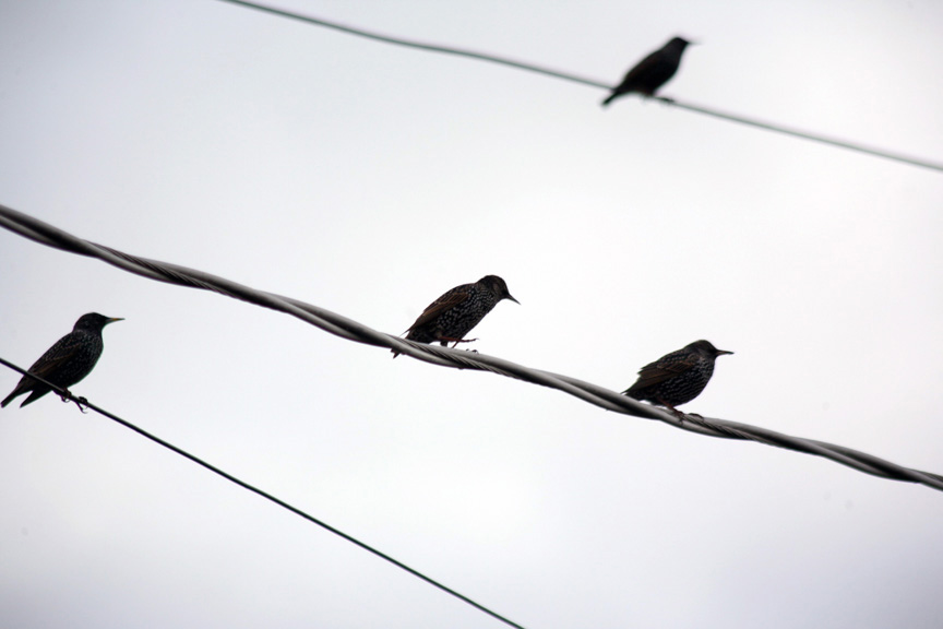 COVERBirds-on-a-Wire